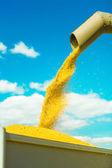 Raccolta del grano — Foto Stock