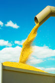 Sklizeň pšenice — Stock fotografie