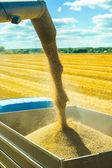 Wheat harvesting — Stock Photo