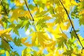 зеленые и желтые листья — Стоковое фото