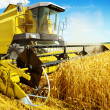 An yellow harvester in work — Stock Photo