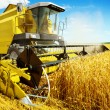 Stock Photo: Yellow harvester in work