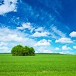 Stock Photo: View on green field and blue sky