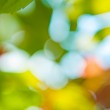 Blurred foliage — Stock Photo #39999553