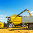 A combine harvester in work. Pouring grains — Stock Photo