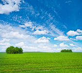 Green field with trees and blue sky — Stock Photo
