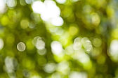 Bokeh of blurred green leafage — Foto Stock