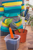 Woman transplant plants in pot — Stock Photo