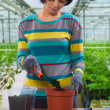 Asian female transplanting flower — Stock Photo #42262499