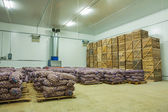 Potato in storage house — Stock Photo