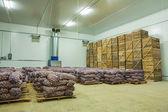 Potato in storage house — Stock Photo