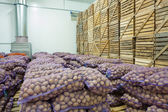 View on bags and crates of potato — Stock Photo