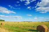 Bales of a straw on field — ストック写真