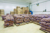 Storage house potato in bags and crates — Stock Photo