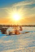 冬のフィールド — ストック写真