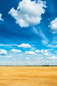 Wheat field and sky — Stock Photo