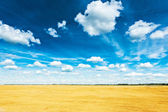 Wheat field and blue cloudy — Foto Stock