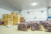 Warehouse view on potato in crates — Stock Photo