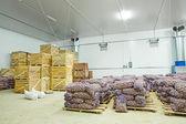 Warehouse view on potato in crates — Stock Photo