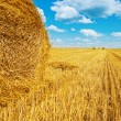 Bales of straw on harvested wheat field — Stock Photo #50204403