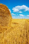 тюки соломы на заготовленной пшеничном поле — Стоковое фото