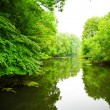 River in forest — Stock Photo #5078302