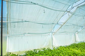 Wall of greenhouse — Stock Photo