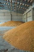 Piles of wheat corns — Stock Photo