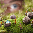 Human spying ants hide treasure, ant tales — Stock Photo