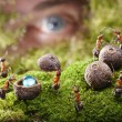 Human spying ants hide treasure, ant tales - Stock Photo
