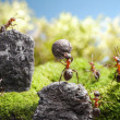 Stock Photo: Rock carvings, ant tales