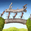Team of ants carry log on bridge, teamwork — Stock Photo #13414506