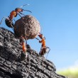 Team of ants rolls stone uphill — Foto Stock