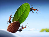 Ants sight land in ocean, crew of yacht, teamwork — Stock Photo