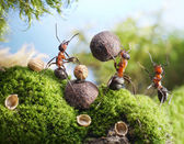 Ants crack nuts with stone, hands off! — Stock Photo