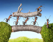 Team of ants carry log on bridge, teamwork — Stock Photo