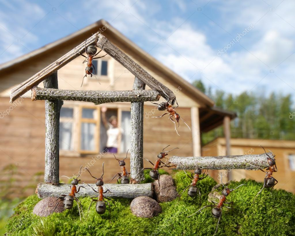 Equipo de hormigas construyendo casa trabajo en equipo fotos de stock antrey 13413366 - Casa de hormigas ...