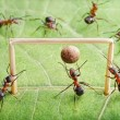 Goal, ants play soccer — Stock Photo