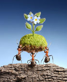 Ants bring life above dead rocks — Stock Photo