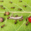Dividing line and cargo traffic at ants work path in anthill, teamwork — Stock Photo