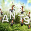 We Are The Ants. ant tales - Stock Photo