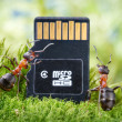Ants read micro secure digital card - Stock Photo