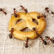 Ants solving problem of cake transportation, teamwork - Stock Photo