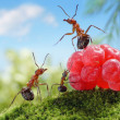 Stock Photo: Sweets are unhealthy for children! ant tales