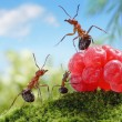 Sweets are unhealthy for children!  ant tales - Stock Photo