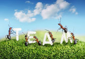 Ants constructing word team with letters, teamwork — Stock Photo