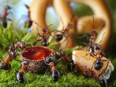 Banquet in anthill with honey and cake, ant tales — Stock Photo