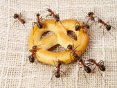 Ants solving problem of cake transportation, teamwork — Stock Photo