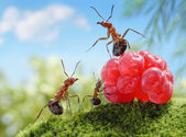 Sweets are unhealthy for children! ant tales — Stock Photo