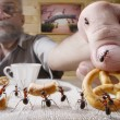 Human rewards ants with bake — Stock Photo